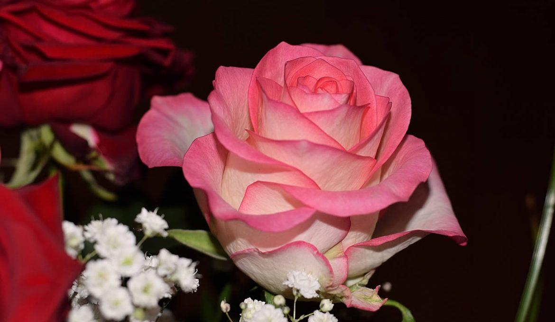 Order a Fresh Cut, Customized Wedding Bouquet for Your Wedding